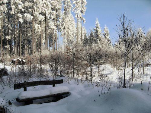 winter snow black forest