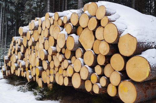 winter snow wood