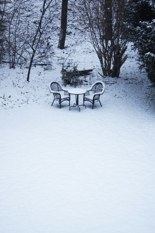 winter garden nature