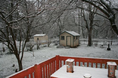 winter backyard snowfall