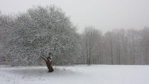 winter tree field