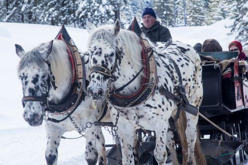 winter slide horses