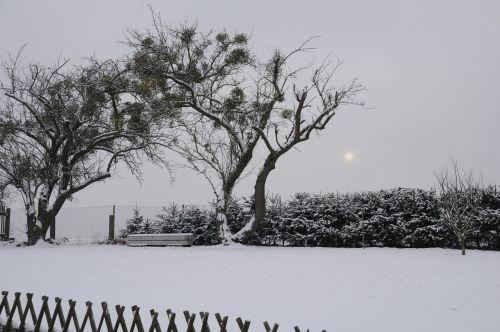 winter garden mysticism