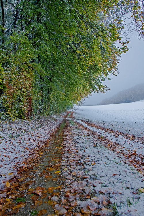 winter blast  winter  snow