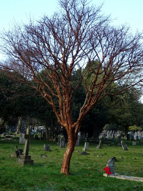 Winter Graveyard Tree