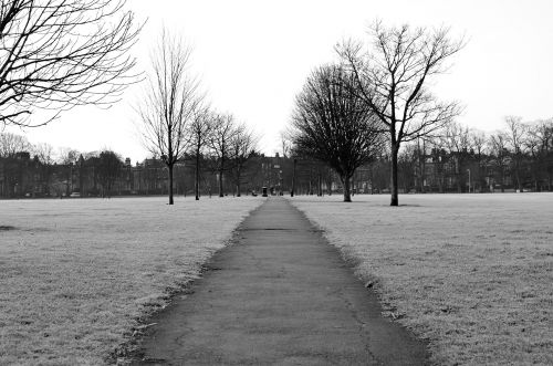 Winter Hoarfrost In The Park