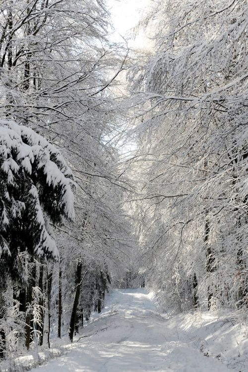 winter impressions sun snow