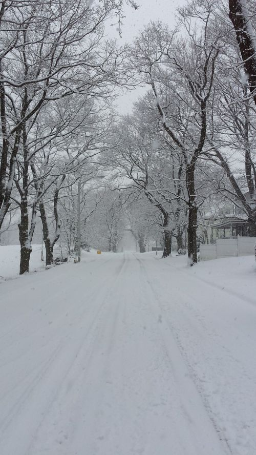 winter in new england snow covered trees massachusetts