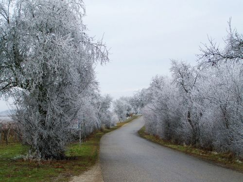 winter landscape frosted alley hoary