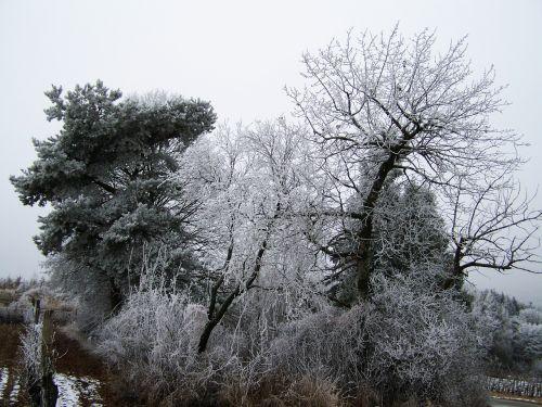 winter landscape hoary clump rimy