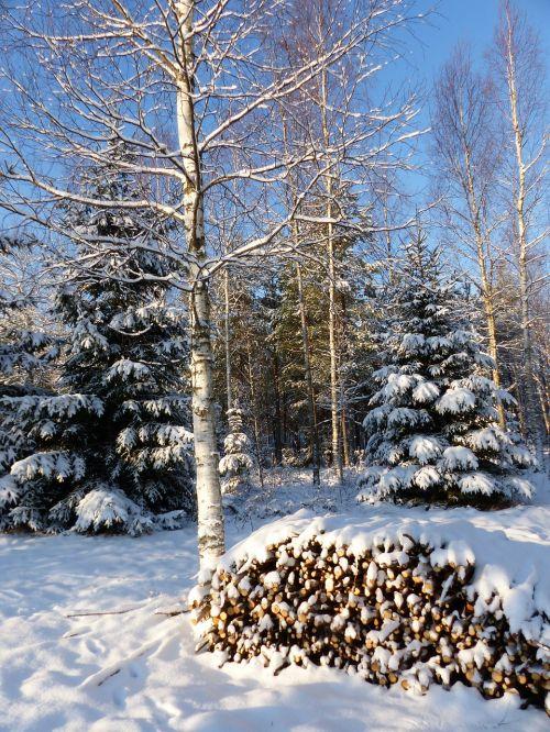 winter landscape forest tree