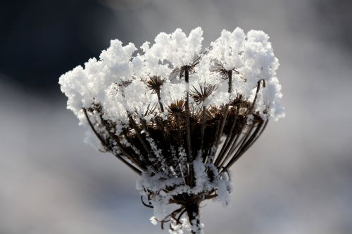 winter magic whisk chemical plants