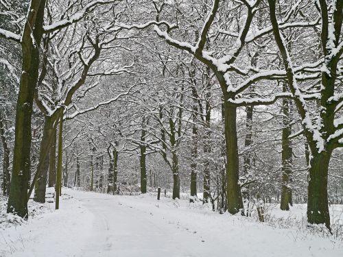 winter magic forest path snowy