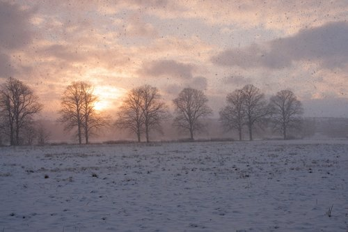 winter magic  winter  wintry