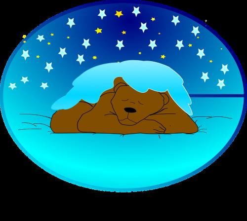 winter sleep hibernation bear
