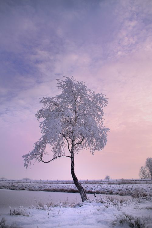 winter tree snow winter