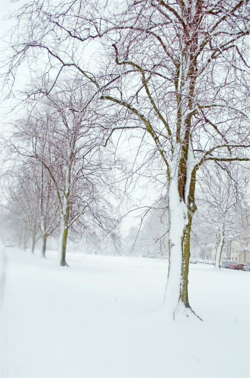Winter Trees - Winter Seasons