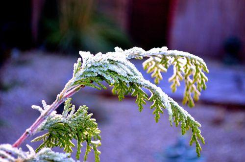šakelė, žiema, sezonas, makro, fonas, gamta, medis, šaltis, žiemos šakelė