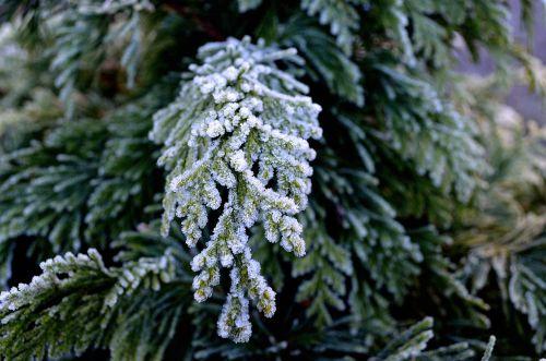 Winter Twig