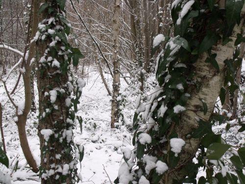 žiema, miškai, snieguotas & nbsp, scena, miškas, žiemos miškai 4