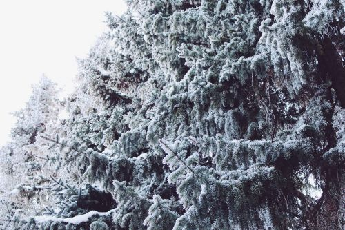 wintry winter landscape