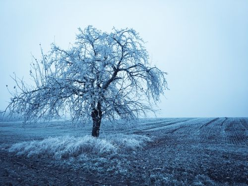 wintry winter tree