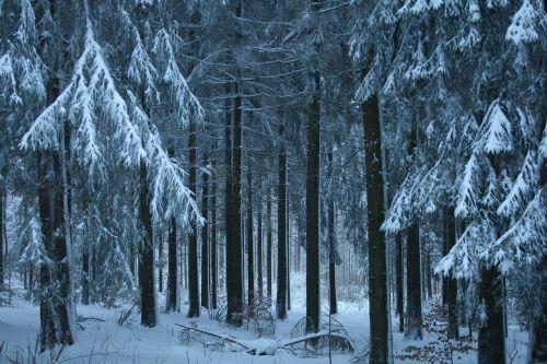wintry snow winter