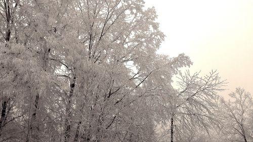 wintry winter hoarfrost