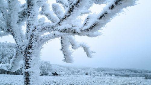 wintry hoarfrost frost