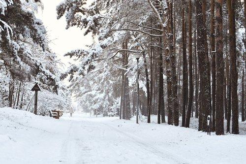 wintry  scenic landscape  snowy