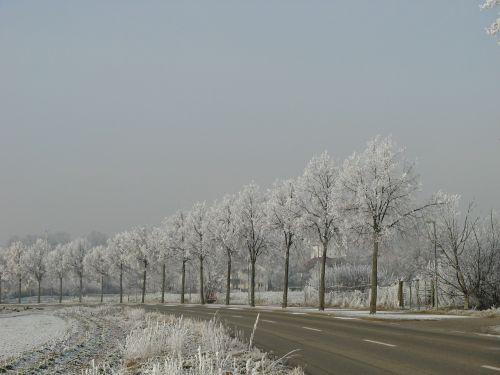 wintry hoarfrost trees