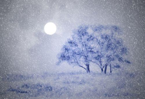 wintry trees snow