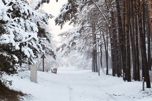 wintry way  snowy way  forest way