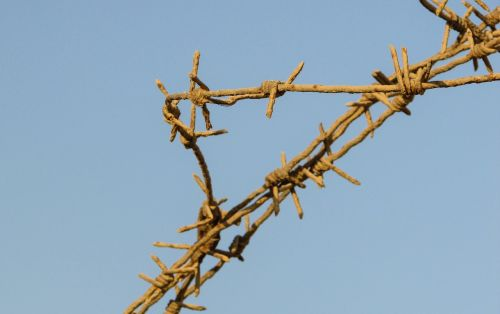 wire fence barbed