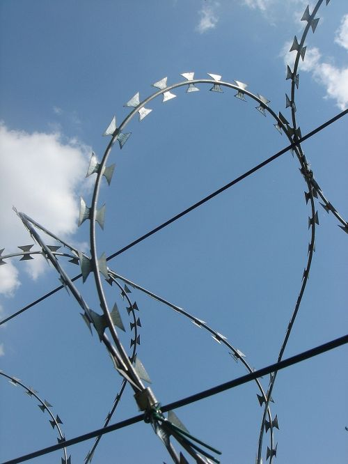 wire fence spines