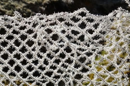 wire mesh fence fence hoarfrost