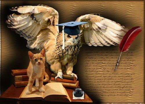 wisdom  owl  bird