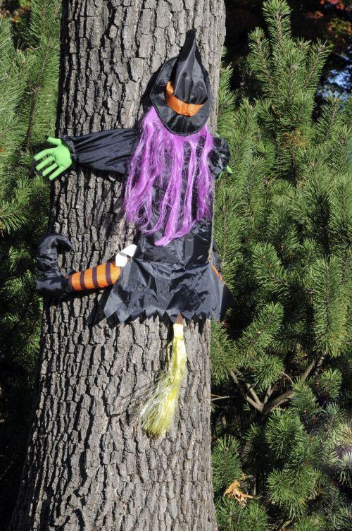 Halloween, ragana, medis, juokinga, ragana nukreipta į medį