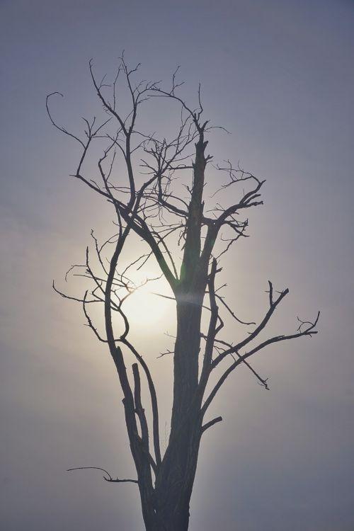 withered gobi sun