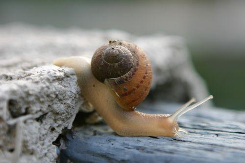wo niu shell crawling
