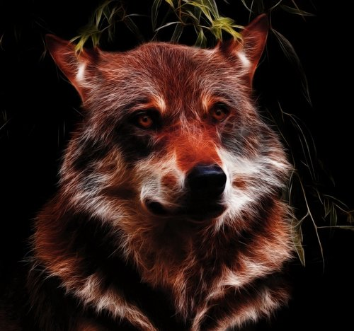 wolf  fractalius  photo art