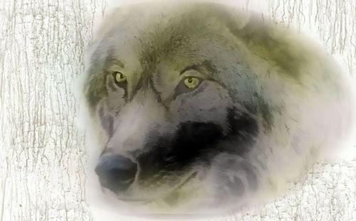 wolf evil nightmare