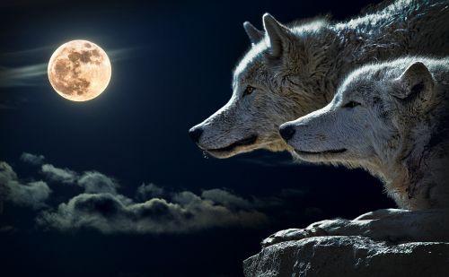 wolf torque wolf moon