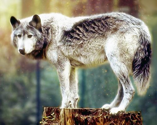 wolf painting wolf wildlife