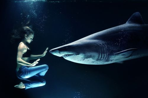 woman hai great white shark