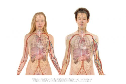 woman human pair