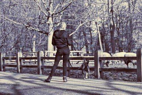 moteris, asmuo, žmonės, stovintis, šuo, tvora, pėsčiųjų takas, parkas, be honoraro mokesčio