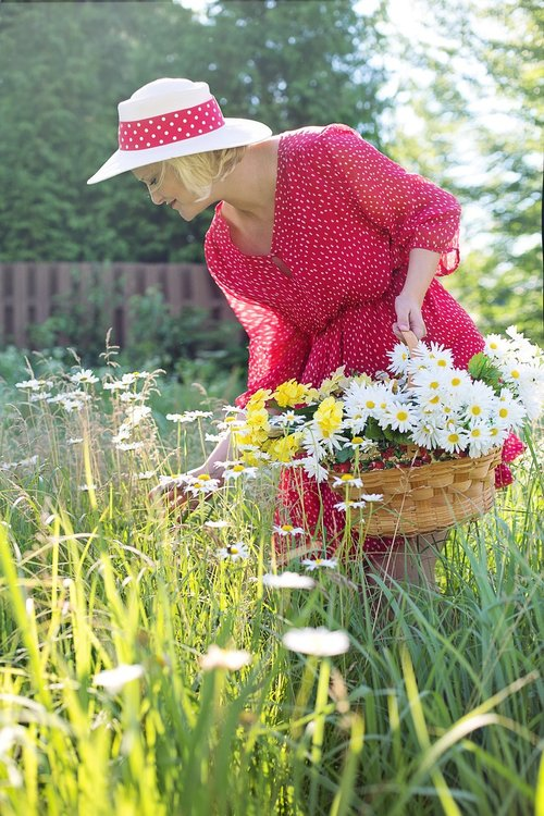 woman  picking daisies  summer