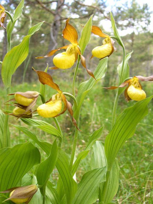 women shoe orchids orchid jena