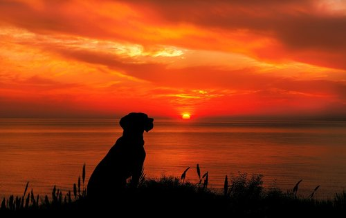 wondering  dog  sunset